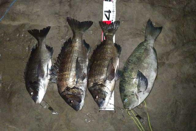 2012年9月15日の釣果