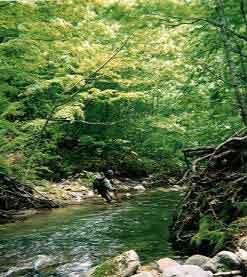 2002和賀川水系渓流釣り2日目