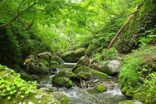 岩手の和賀川水系の渓流