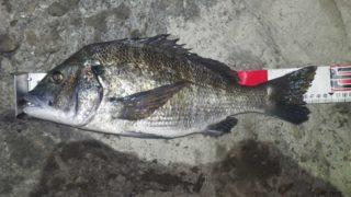 黒鯛47cm