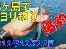 城ヶ島でサヨリ爆釣!
